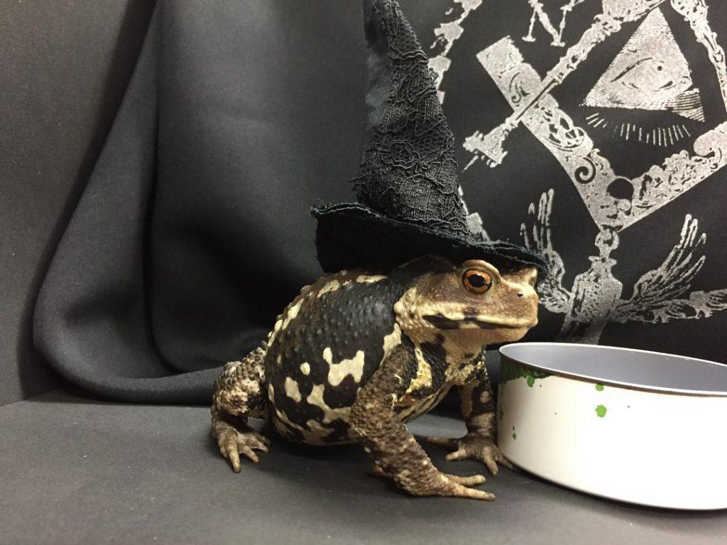 h.naoto frog model
