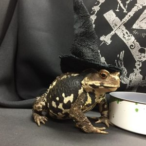 h.NAOTO's Newest Model Is a Frog. Literally.